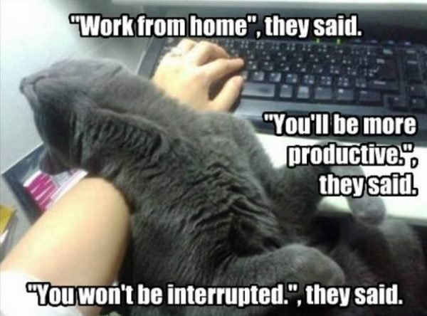 work from home WFH meme